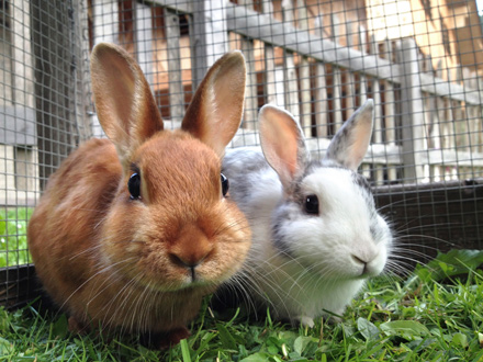 Helpful advice on looking after pet rabbits