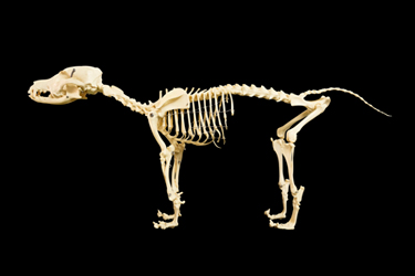animal-skeleton-21-11-16-main