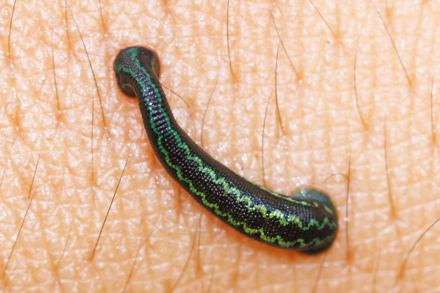 Leech-Feeding-11.2.17-Blog