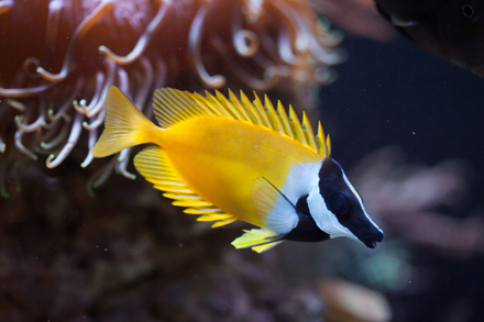 Rabbitfish-17.2.17-Blog