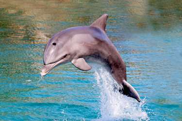 Dolphin-Jumping-June-17-Main