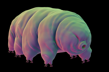 Tardigrade-July-17-Main