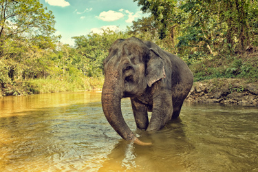 Elephant-Bathing-Aug-17-Main