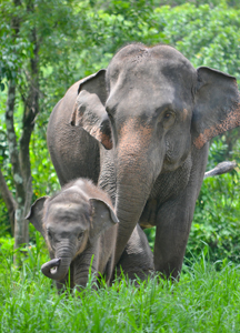 Elephant-Calf-and-Mother-Aug-17
