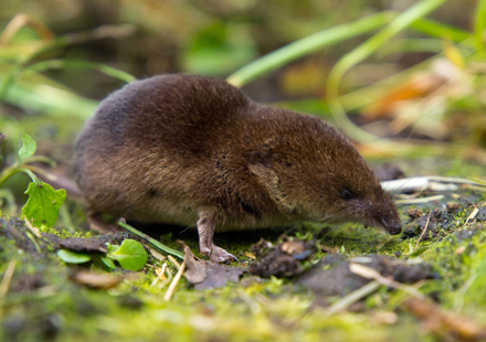 Common-Shrew-Sep-17-Blog