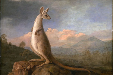Kangaroo-Painting-Sep-17-Main