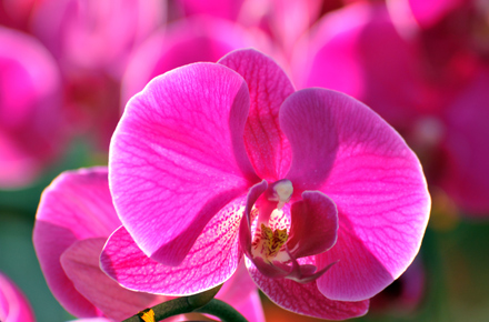 Pink-Orchid-Sep-17-Blog