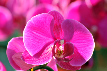 Pink-Orchid-Sep-17-Main