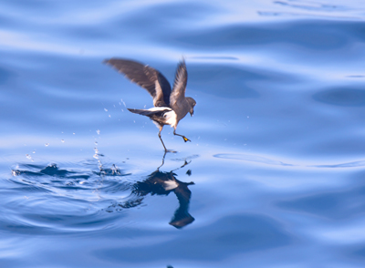 Storm-Petrel-Sep-17-Blog