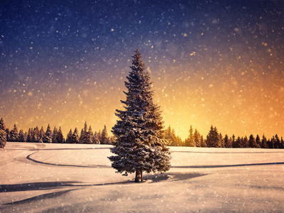 Winter sunset with snowflakes and tree