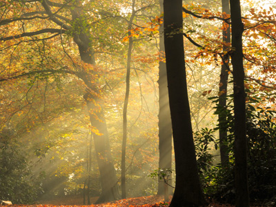 Autumn forest with sunlight through trees