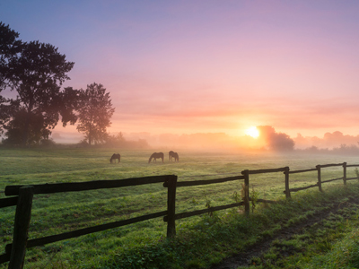 Horses in a field on a misty morning