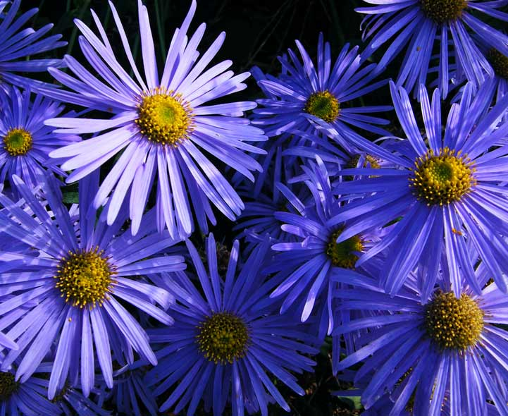 Plants that are annuals recognizing identifying and growing mightylinksfo