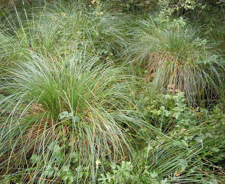 Ornamental grasses quiz identification and recognition for Wild ornamental grasses