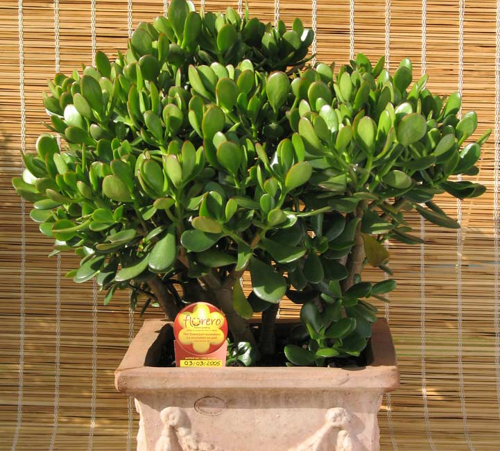 What is names of indoor plants ask home design - Names of indoor plants ...