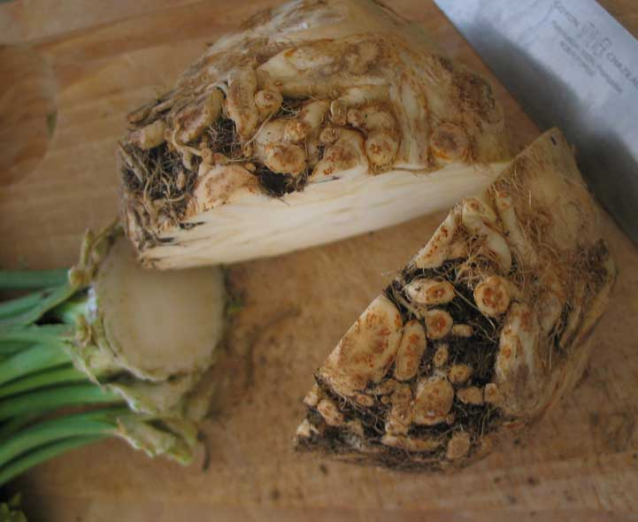 how to grow celeriac uk