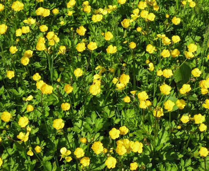 how to turn a weed infested lawn