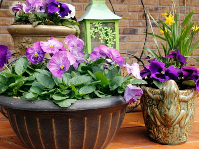 Annuals - Container Plants 2