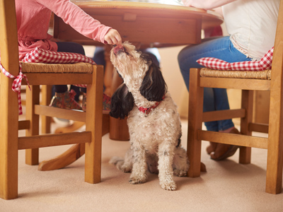 Children feeding the dog under the table