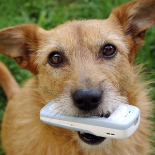 Education-Quizzes-Dog-And-Phone