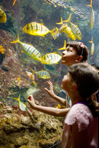 Children on educational day out at aquarium