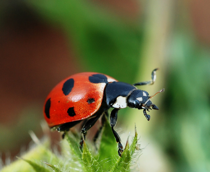 Insects 2 Recognition Of British Insects Pictures From
