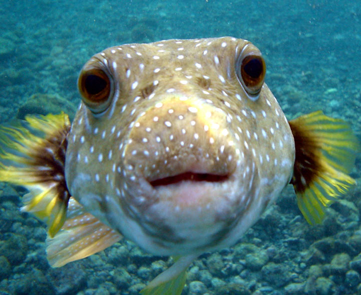 list of synonyms and antonyms of the word sea fish