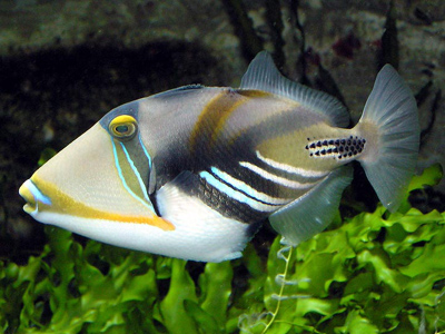 Deep-sea fish found to be warm-blooded › News in Science (ABC Science)