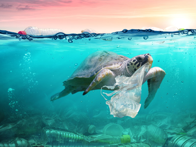 A turtle eating a plastic bag